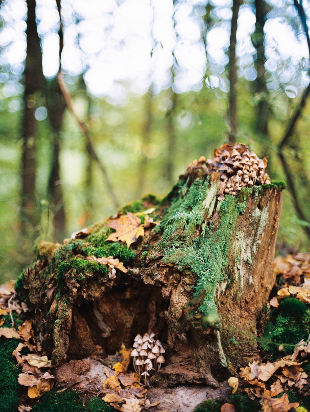 лес в городе Сумы