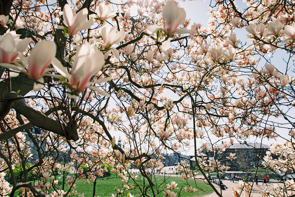 Copenhagen Spring | Film photography | Kodak Gold 200